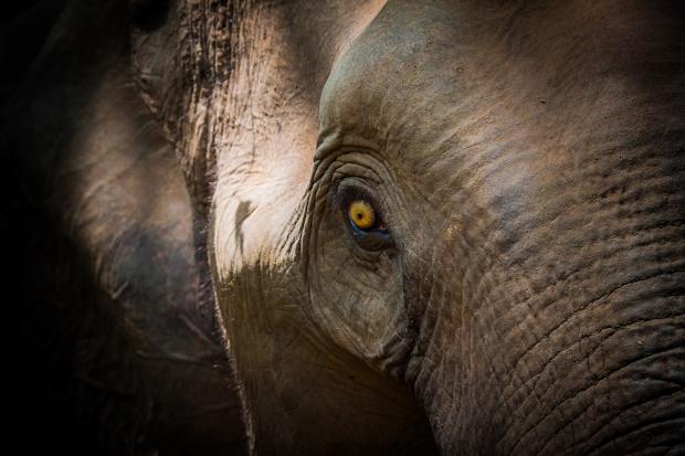 Elephant IMG_7708-41