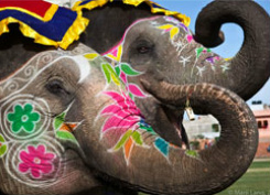 Festival of Color - India - Decorated Elephants 1347111479